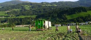 ErntehelferInnen in Tirol